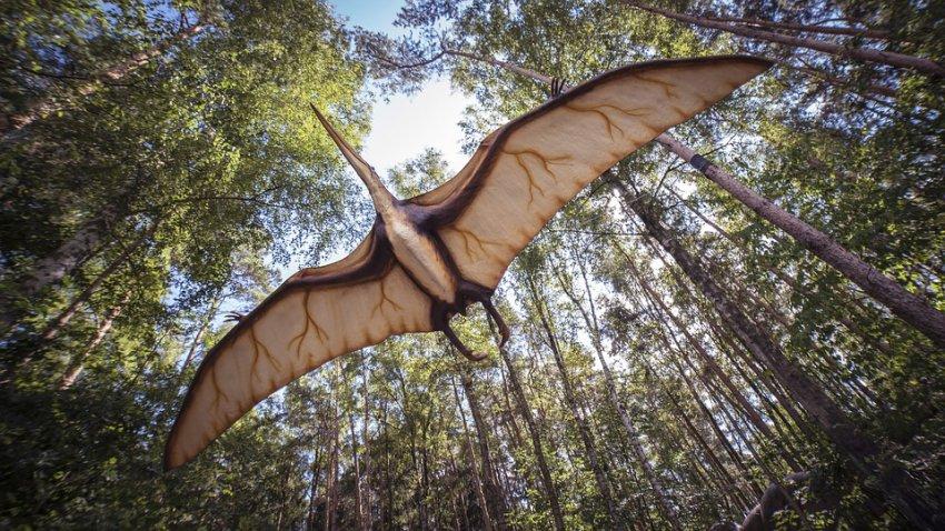 Обитал на Земле 96 млн лет назад: в Австралии нашли останки «железного дракона»