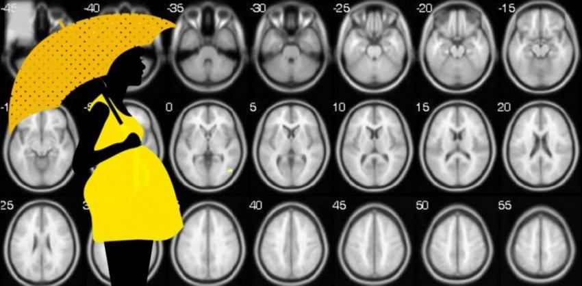 Как роды биологически омолаживают мозг женщины