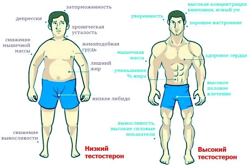 Как гормоны могут повлиять на жизнь мужчины