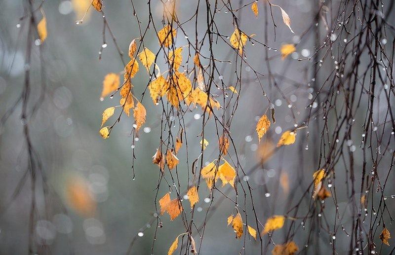 Дмитриев день отмечают 8 ноября: о чем просить в молитве Господа
