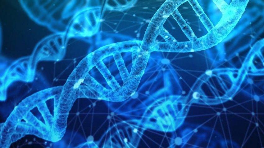 Ученые предложили внедрить в ДНК человека гены тихоходок для повышения выживаемости