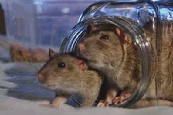 В Москве из-за крыс закрыли магазин «Пятерочка»