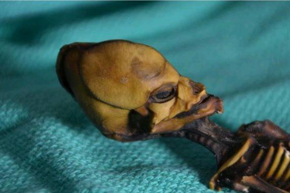 Ученые разгадали тайну Атакамского гуманоида