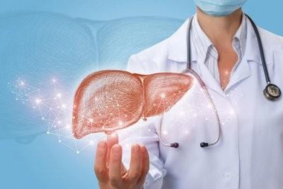 Ученые смогли найти способ остановить фиброз печени
