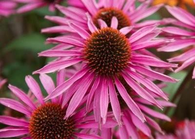 Названы травы, которые эффективны в борьбе с диареей