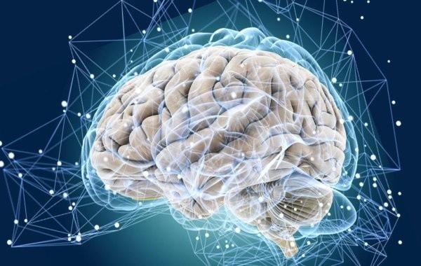 Определен способ замедления процесса старения мозга