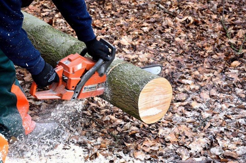 Разоблачение масштабов незаконной вырубки русского леса