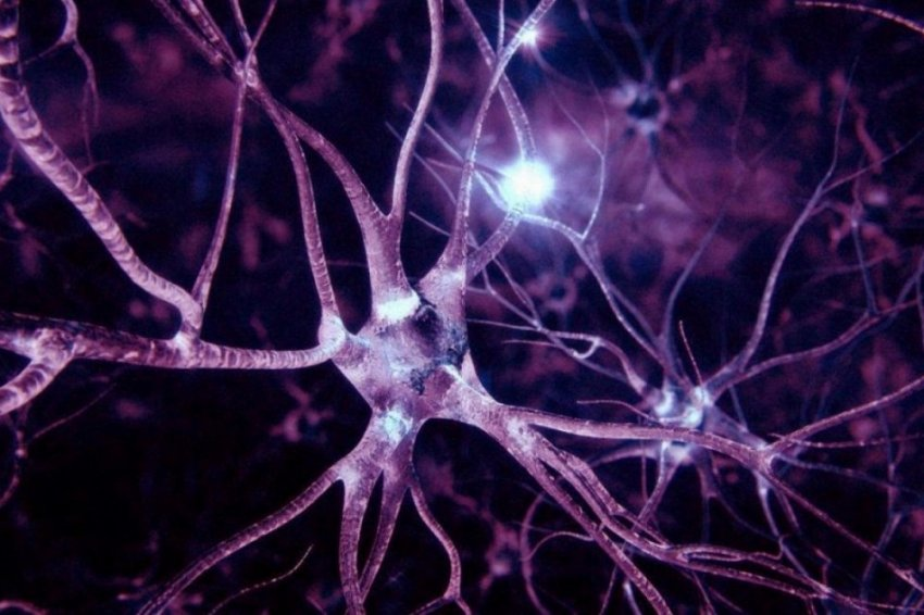 В клетках кожи человека обнаружили связи, похожие на нейроны