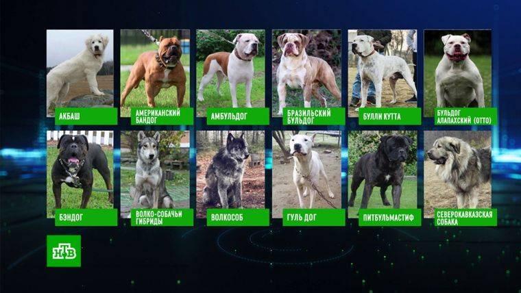 Запрещенные породы собак в России утверждены законом
