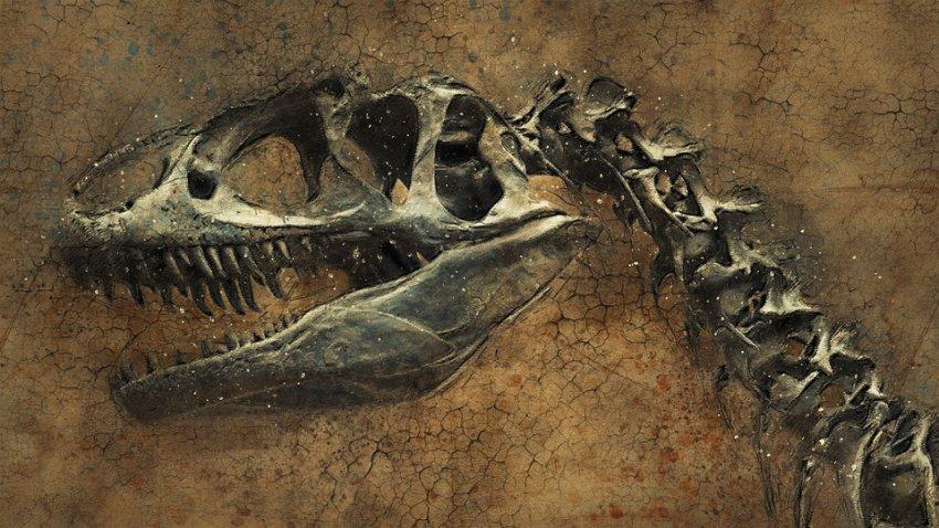 Ученые обнаружили ДНК динозавров в древних окаменелостях
