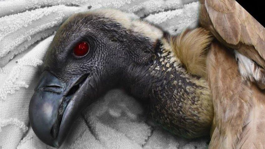 При загадочных обстоятельствах птицы падают замертво по всему миру