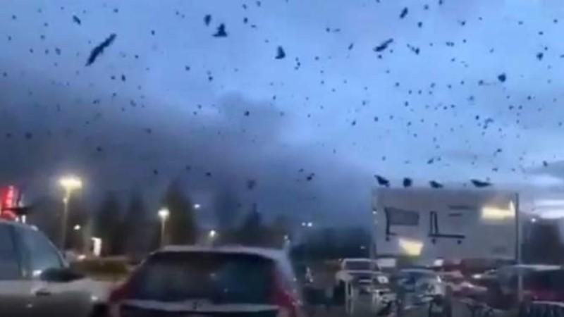 Тысячи ворон заслонили собой небо над некоторыми американскими городами