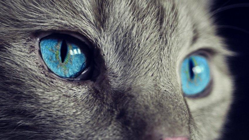 В Нью-Йорке у двух кошек обнаружили Covid-19