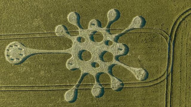 В Великобритании на поле появился рисунок похожий на коронавирус