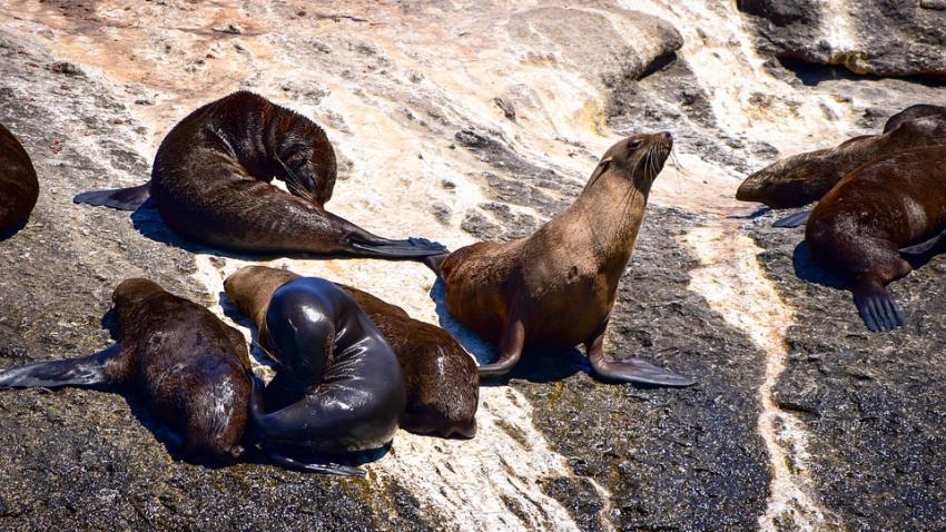 В Нунавут из-за загадочного звука пропали киты и тюлени