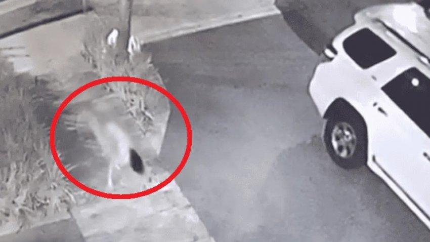 В Сеть попало жуткое видео с бегающей на четвереньках девушкой