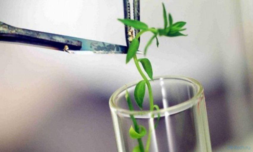 Могут ли растения слышать, общаться?
