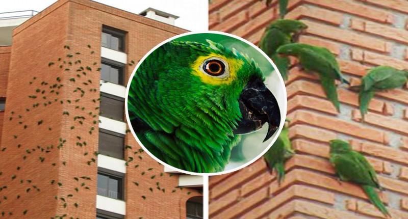 В Бразилии попугаи грызут кирпичное здание: ученые не в состоянии объяснить их поведение
