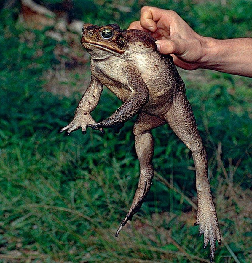 Инвазивные виды или убийцы экосистем