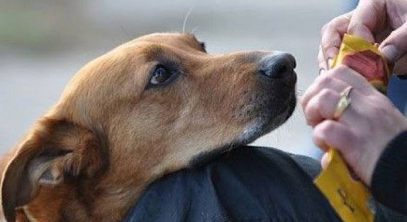 Почему обидеть животное на Федулов день 5 января, значит, привлечь тяжелые болезни