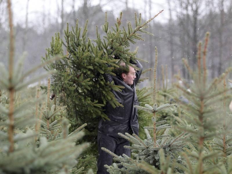 Как в России и за границей утилизируют новогодние елки