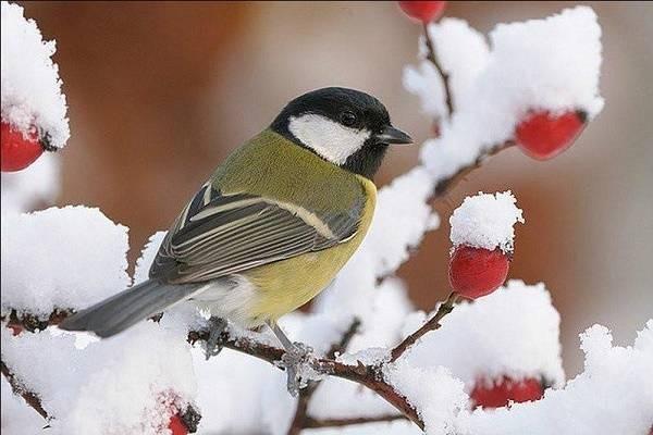 Традиции, обряды, запреты и приметы Ермилова дня, отмечаемого по народному месяцеслову 26 января