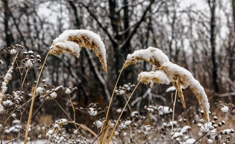 Синоптики предупредили о сильном морозе в Москве в феврале 2021 года