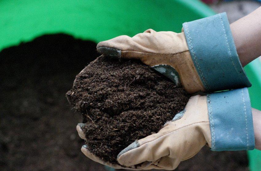 Простые методы обеззараживания почвы для рассады, доступные каждому садоводу