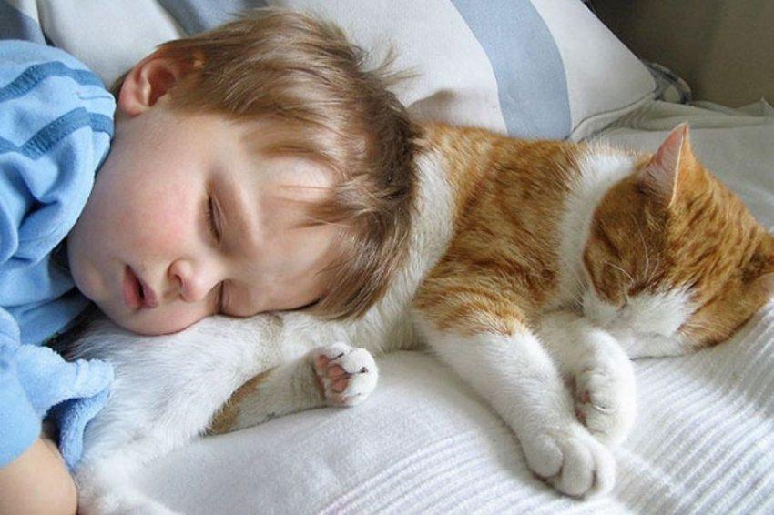 Не любит кошек только тот, кто не встретил свою кошку