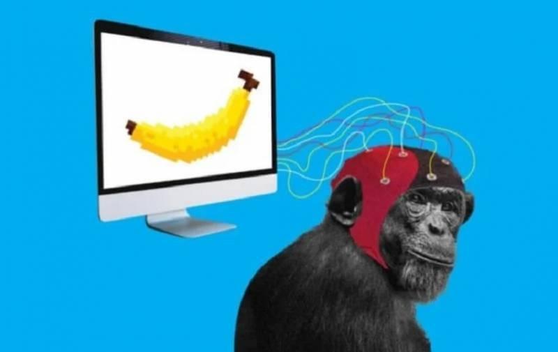 Илон Маск объявил о вживлении чипа в мозг обезьяны