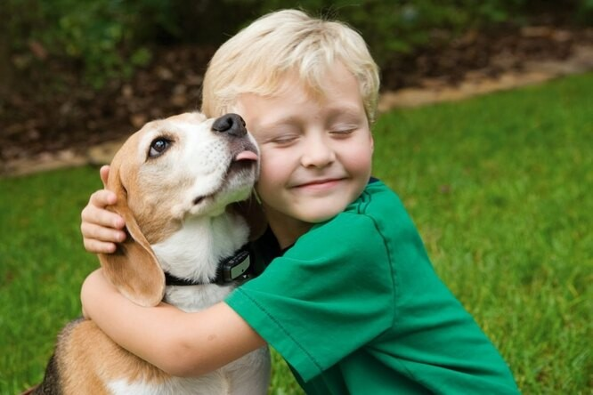 Чем могут быть опасны домашние животные