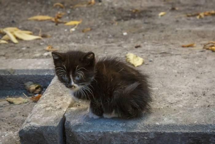 В России хотят ввести штрафы за выброшенных на улицу животных