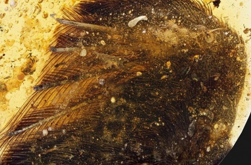 ТОП-10 Необычных находок сохранившихся в янтаре