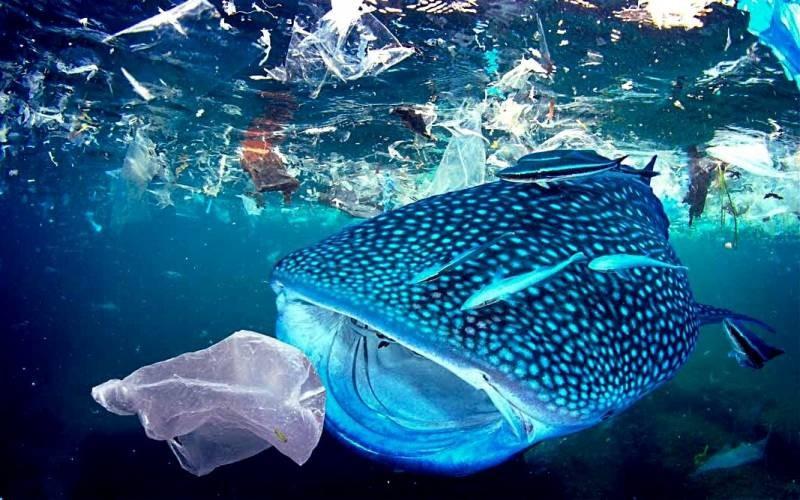 Ученые «взвесили» пластик в мировом океане и ужаснулись полученному результату