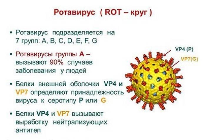 Что такое ротавирусная инфекция, и как она проявляется у детей и взрослых