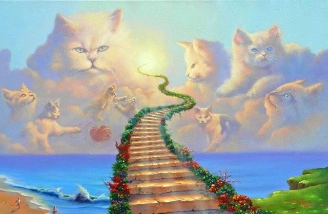Существует ли у животных душа и что происходит с ней после смерти
