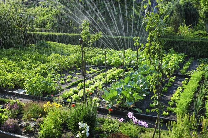 Какие работы можно делать, согласно лунному календарю, в июне на огороде