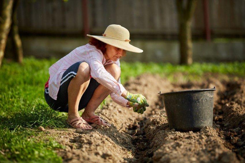 В какие дни мая 2021 года запрещены посадочные работы на огороде