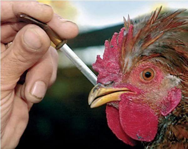Первый случай заражения птичьим гриппом H10N3 зарегистрировали в Китае