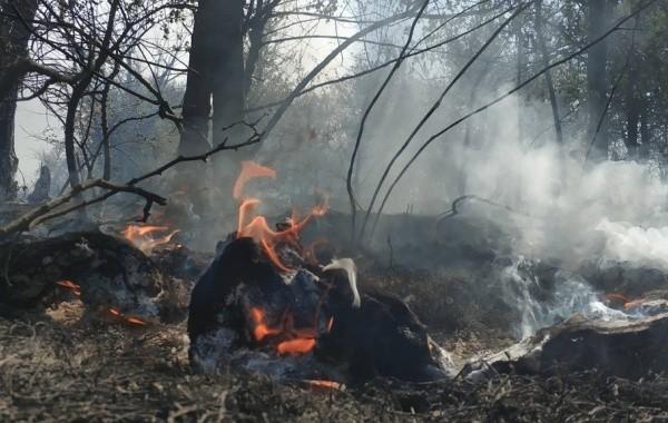 Площадь пожара под Первоуральском возросла до 240 гектаров