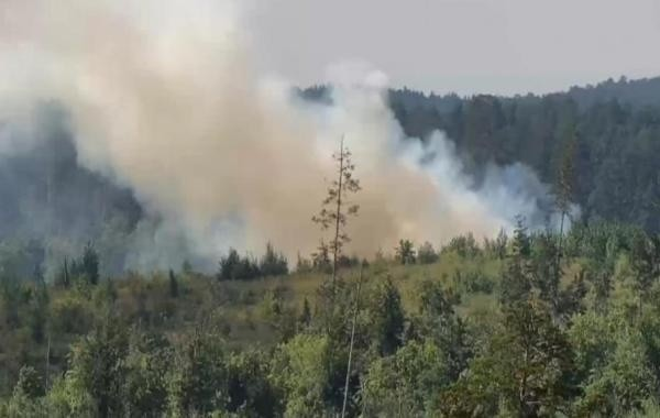 10 лесных пожаров зафиксировано в Тюменской области