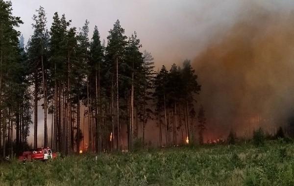 В Марий Эл сохраняется тление лесов на площади 16 гектаров