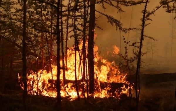 Ущерб от лесных пожаров в Свердловской области оценили в 52 млн рублей