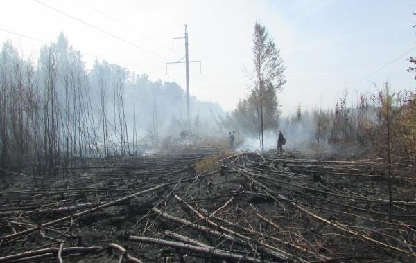 В Марий Эл уменьшается количество лесных пожаров