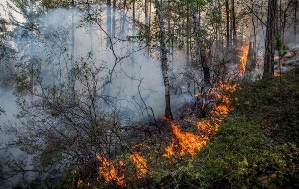 В трех районах Якутии действуют лесные пожары в 10-километровой зоне