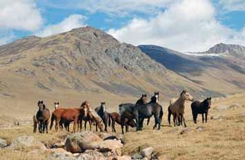 Власти Таджикистана вернули жителям Лейлекского района табун лошадей, перешедший на их территорию