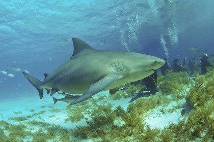 Акула напала на серфера и оторвала ему ногу